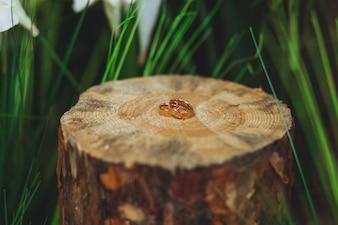 Alianças de casamento no tronco em uma grama verde