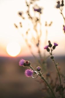 Alianças de casamento penduradas em uma flor no fundo do pôr do sol
