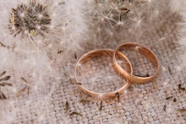 Alianças de casamento sobre os dentes de leão de fundo