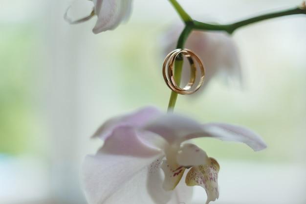 Alianças de ouro penduradas em orquídea branca