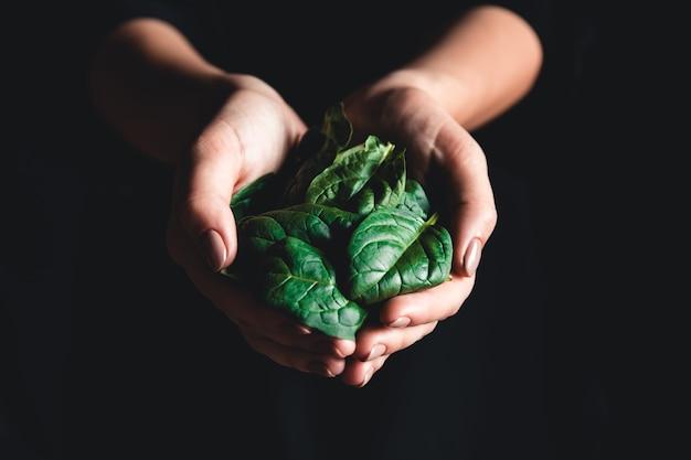Alimentação saudável, dieta, comida vegetariana e conceito de pessoas - close-up de mãos de mulher segurando espinafre