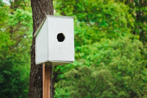 Alimentador de pássaros brancos em uma floresta verde