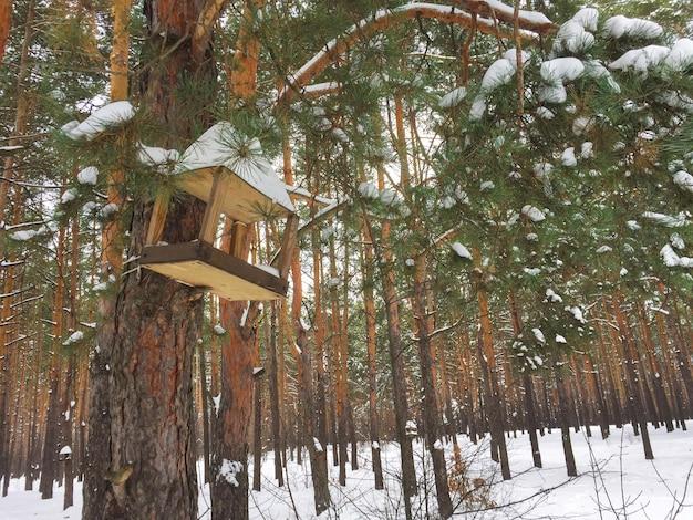 Alimentador de pássaros de madeira na floresta de pinheiros de inverno