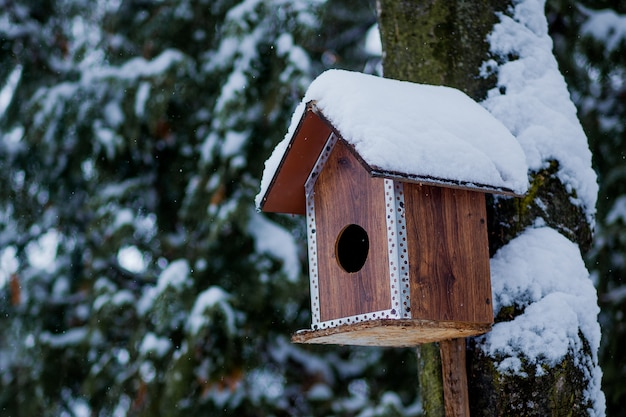 Alimentador de pássaros em winter park. casa do pássaro pendurada ao ar livre no inverno em uma árvore coberta de neve.