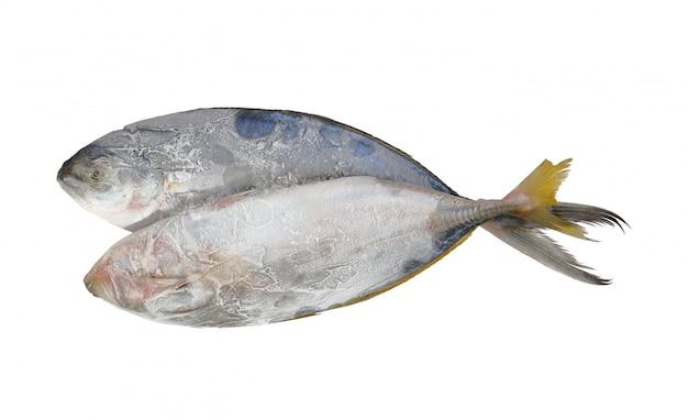Alimento de peixes frescos no gelo, branco.