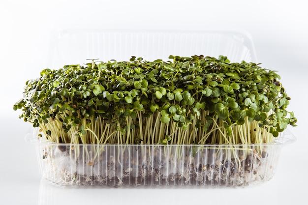 Alimentos ecologicamente limpos. microgreen em um branco (fechar)