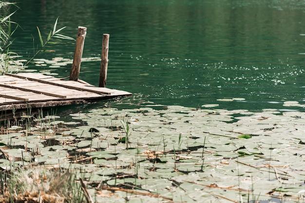 Almofadas de lírio flutuando na lagoa perto do cais