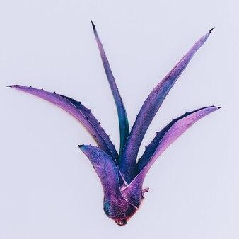 Aloe minimal fashion design de cores