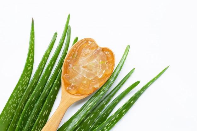 Aloe vera é uma planta medicinal popular para a saúde e beleza, fundo branco.