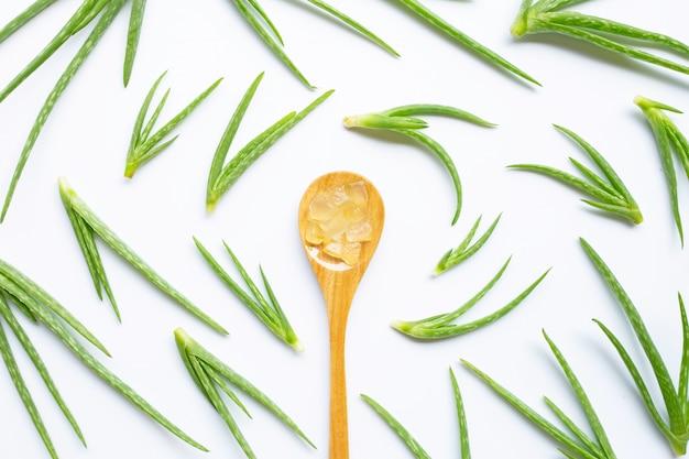 Aloe vera é uma popular planta medicinal para a saúde.