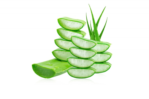 Aloe vera fresco isolado um medicamento à base de plantas muito útil para cuidados da pele e cabelo.