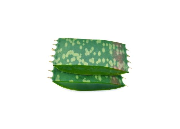 Aloe vera isolado no fundo branco