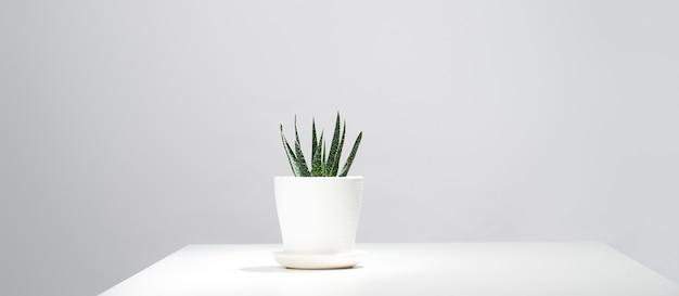 Aloés em vaso interno em fundo cinza vazio