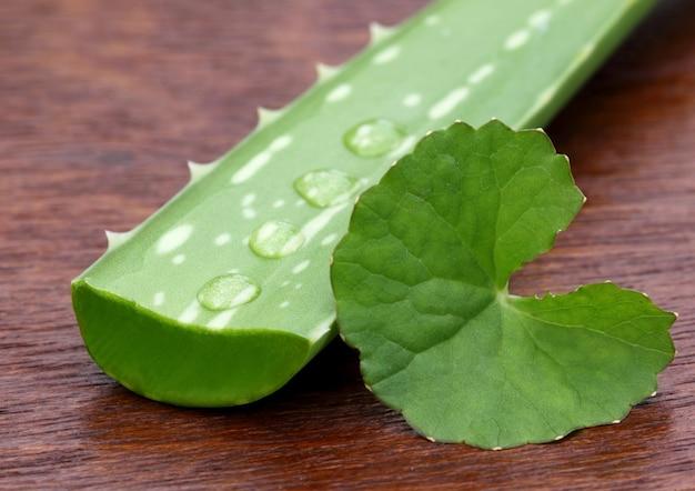 Aloés medicinal com thankuni na superfície de madeira