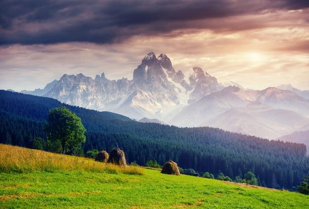 Alpes montanha prado tranquilo verão vista