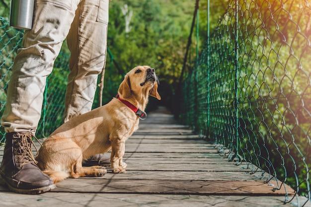 Alpinista com cachorro na ponte pênsil de madeira
