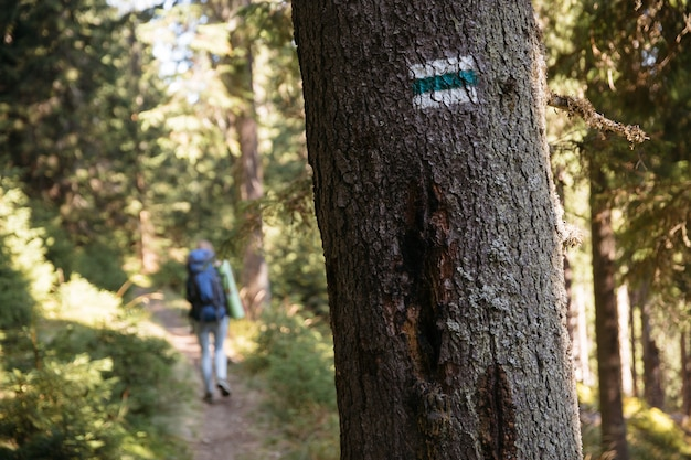 Alpinista com mochila na trilha marcada na floresta