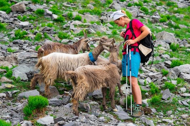 Alpinista de mulher encontra cabras da montanha