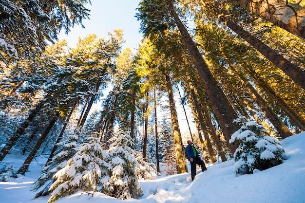Alpinista de turista homem na floresta de pinheiros de inverno coberto de neve