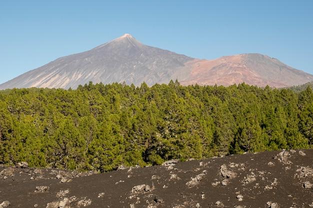 Alta montanha com floresta de coníferas e pedras