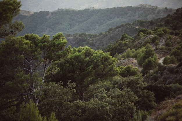 Alta vista da bela paisagem com montanhas e árvores