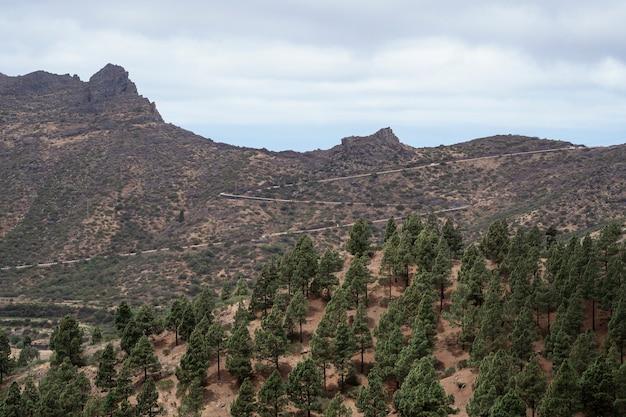 Altas montanhas com floresta verde
