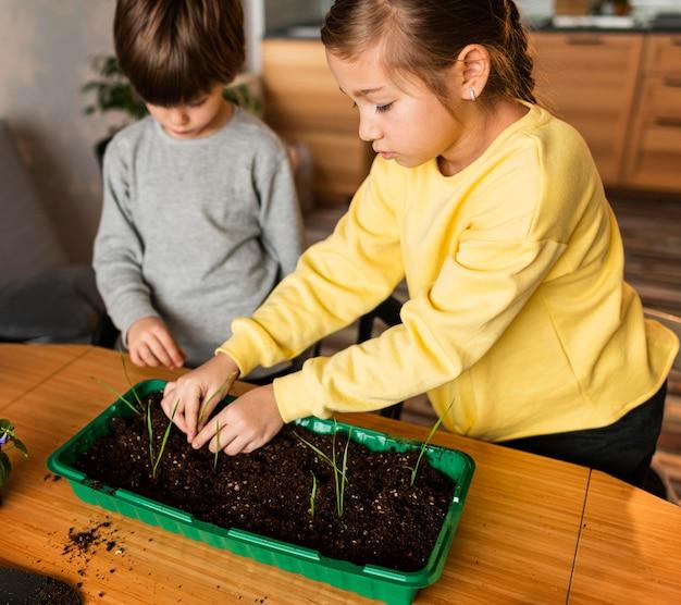Alto ângulo de crianças plantando brotos em casa