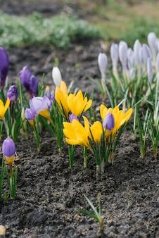 Alto ângulo de flores desabrochando no chão