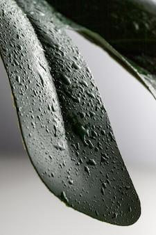 Alto ângulo de gotas de líquido na folha