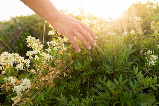 Alto ângulo de pessoa correndo as mãos pela grama ao ar livre