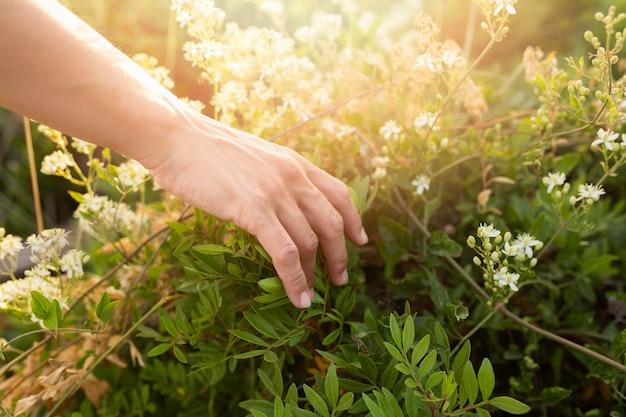 Alto ângulo de pessoa correndo as mãos pela grama
