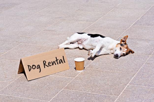 Aluguel de cão para caminhada durante quarentena de coronavírus
