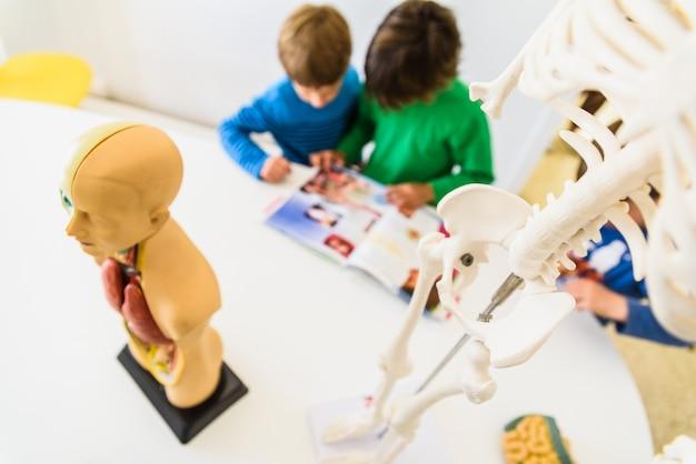 Alunos em anatomia e biologia humana com um modelo artificial do corpo humano com órgãos.