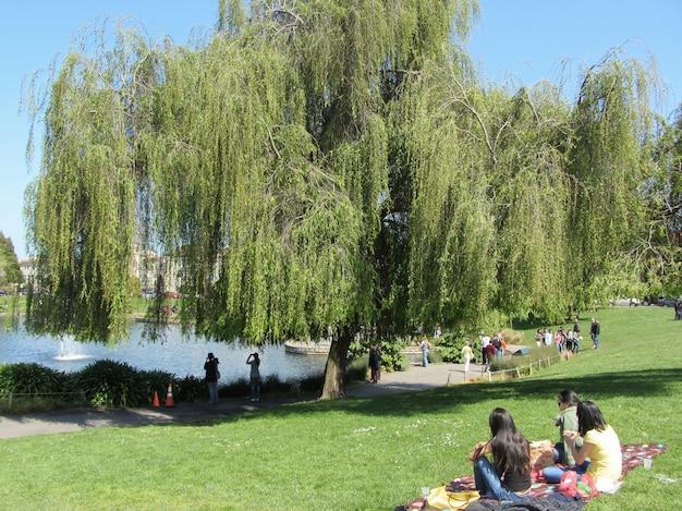 Alunos sentam na grama perto do lago em são francisco