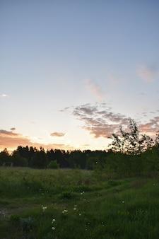 Amanhecer colorido em uma clareira na floresta