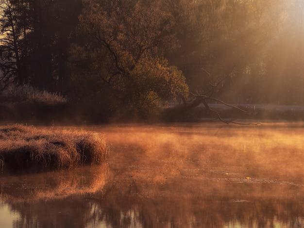 Amanhecer ensolarado em um pântano nebuloso. raios de sol da noite na grama seca que cresce no pântano. foco suave.