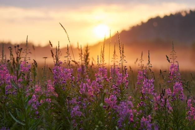 Amanhecer no campo de manhã cedo. luz do sol suave. as flores silvestres florescem no verão, o campo está coberto de grama. área rural