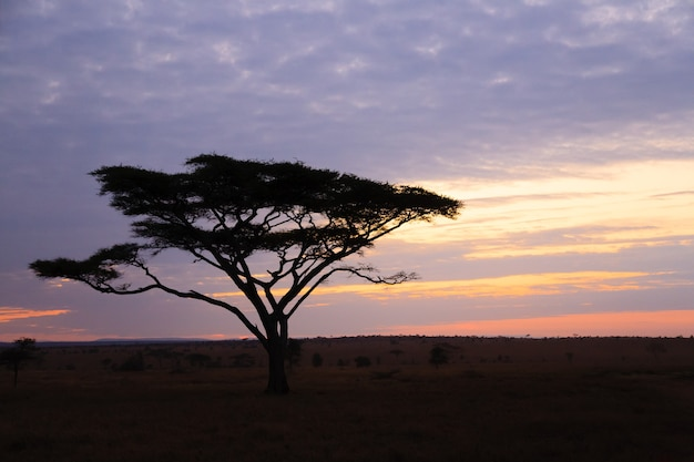 Amanhecer no parque nacional serengeti, tanzânia