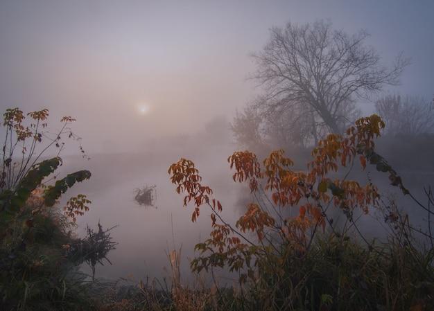 Amanhecer no rio