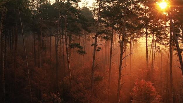 Amanhecer sobre uma bela floresta com árvores altas