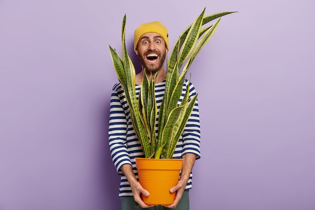 Amante alegre de plantas masculinas se preocupa com flores domésticas decorativas, segura um vaso de sansevieria