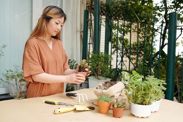 Amante de plantas repotando pequenas flores em um vaso maior, adicionando solo rico e fertilizantes