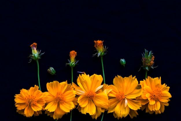 Amarelo cosmos arranjo de flores em estilo de cartão postal