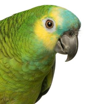 Amazônia de frente azul isolada