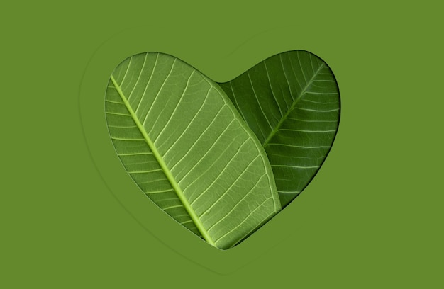 Ambiental, cuidados de saúde. folha verde como coração. energia verde, recursos renováveis e sustentáveis