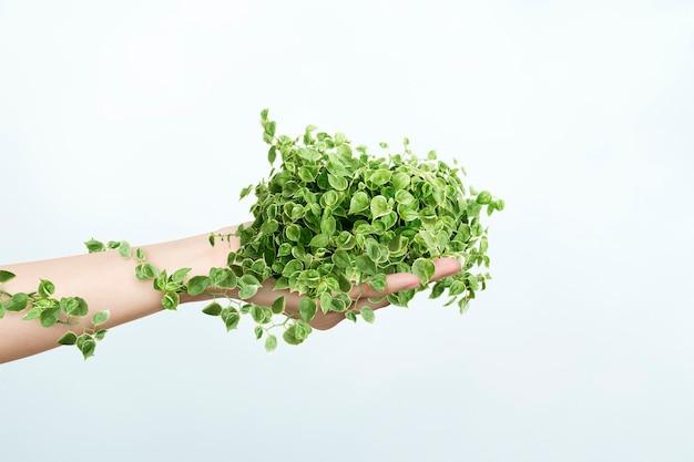 Ambientalista de vida sustentável segurando uma planta