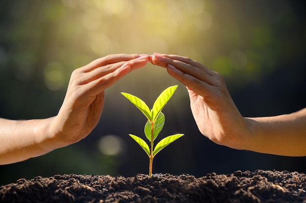 Ambiente dia da terra nas mãos das árvores que cultivam mudas.