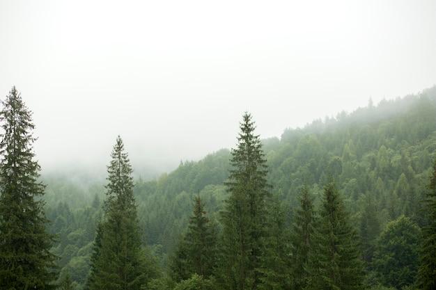 Ambiente rural tranquilo à luz do dia