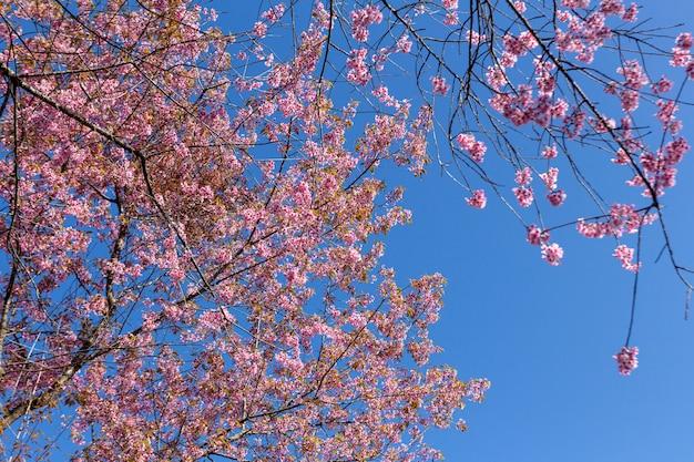 Ameixa brilha no céu azul