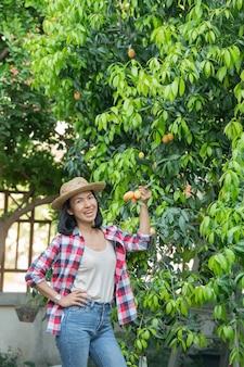 Ameixa mariana, manga mariana ou plango (mayongchit em tailandês) a temporada de colheita vai de fevereiro a março. mão de mulher agricultora segurando um ramo de ameixa amarela mariana s weet.